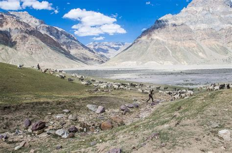 Shepherds Background Check Notes From Spiti
