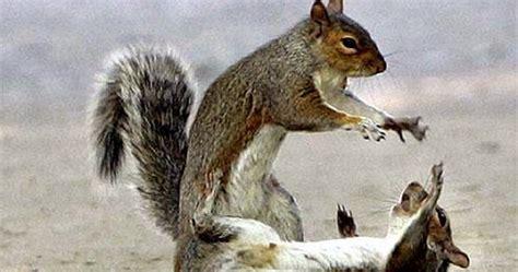 tupai ahli hipnotis choonytunes kumpulan gambar hewan