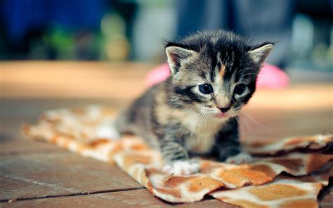 wallpaper hd cute cat cute cat hd wallpaper series picture hd litle pups