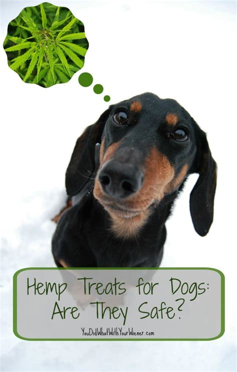cbd for dogs hemp cookies for dogs are cbd products safe and