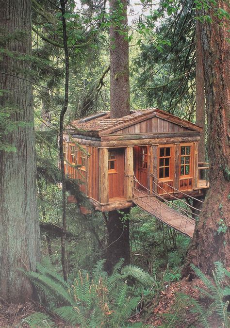 Cabin In Tbe Woods by Terrierman S Daily Dose A Cabin In The Woods