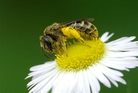 Neonicotinoids Afe Research Project To Create Buzz For Honey Bee Health