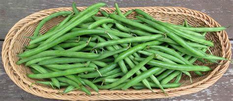 voltaire s garden green bean plenty