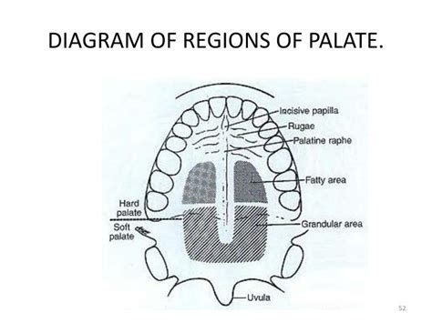 palate diagram parts of palate within parts of fiat500america