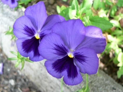immagini dei fiori le pi 249 foto dei fiori donne oggi il portale