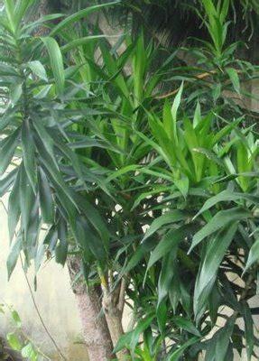 berbagai jenis rempah daun bunga  buah tips petani