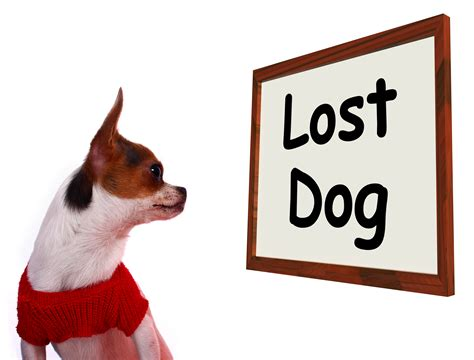 lost yorkie lost clipart images