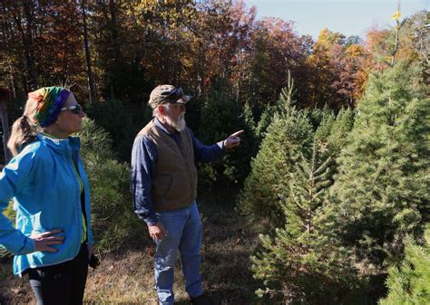 best real christmas trees in south jersey south jersey tree farms prepare for news pressofatlanticcity