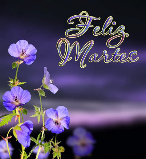 imagenes de flores de feliz martes banco de im 193 genes flores lilas con mensaje 161 feliz martes
