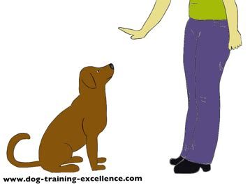 teach puppy to stay your to stay step by step guide