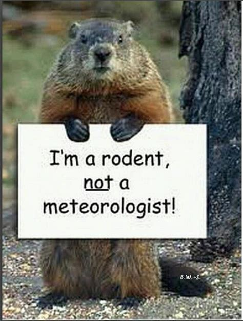 groundhog day up groundhog phil says leave him alone