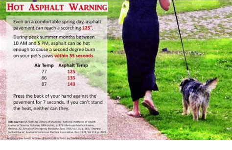 comfortable temperature for dogs hot asphalt warning even on a comfortable spring day