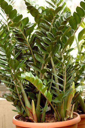 engrais plante d int rieur 1000 id 233 es sur le th 232 me plante d int 233 rieur sur pinterest