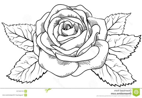 drawing pictures photos black flower drawing drawings gallery