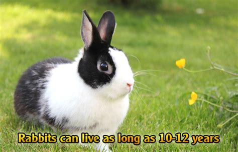 new year rabbit facts interesting facts about rabbits did you pets