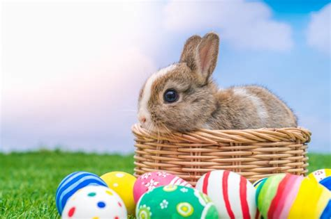 why is the rabbit associated with easter baby background vectors photos and psd files free