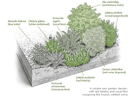 rain garden section north american lawn landscape growing values together