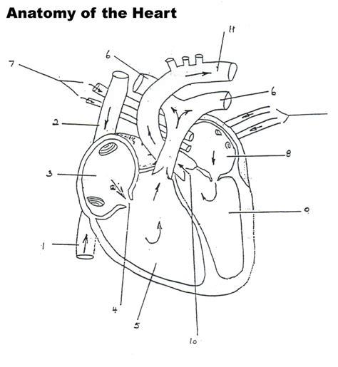 blood flow through diagram blood flow diagram worksheet anatomy human