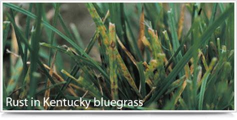 turf weeds backyard farmer university  nebraska