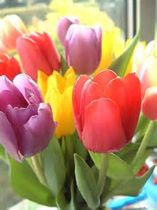 what do the colors of flowers tulip color meanings dfw flowers