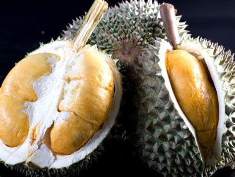 Bibit Durian Musang King Banjarmasin bibit durian black duri hitam original durian