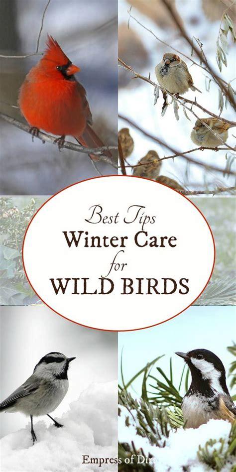 25 unique bird food ideas on pinterest bird feeders
