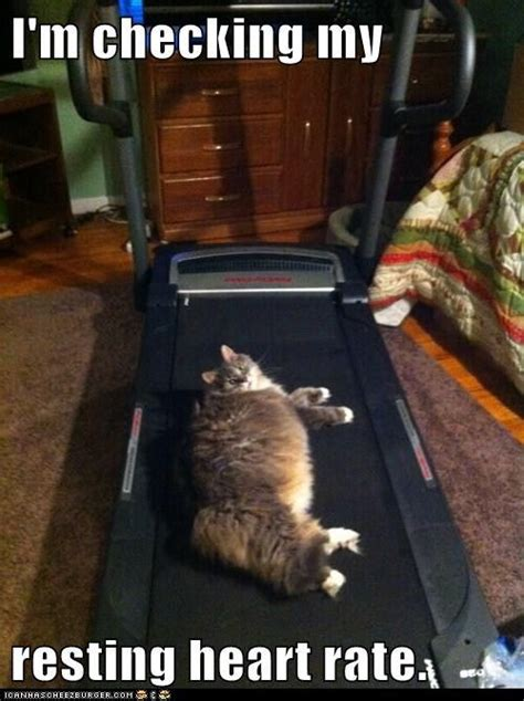 Treadmill Meme - kitty cats funny cat pictures and heart rate on pinterest