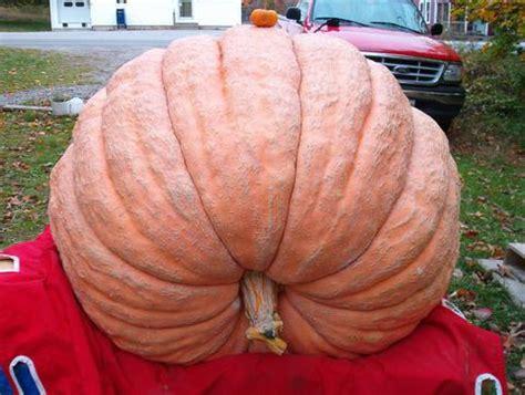 903 Dmg Sades mepgo maine pumpkin growers organization