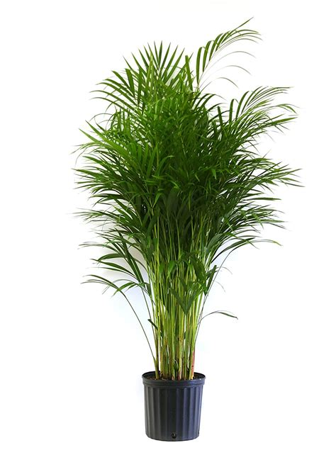 small house plants 100 small house plant small plants plant for office