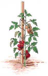 Plastic Climbing Plants - staking vegetables howstuffworks
