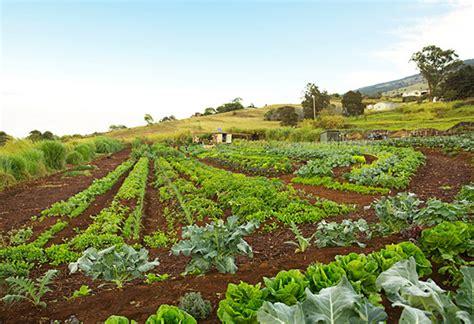 An Exclusive Look At Oprah S Farm 11 Beautiful Photos Vegetable Gardening In Hawaii