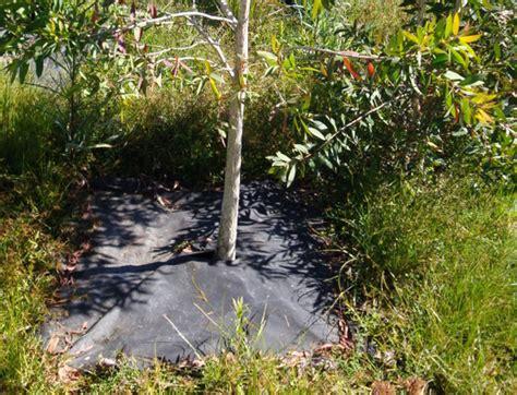 weed mat weed mat weed matting biodegradable weed