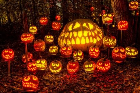 pumpkin lanterns o lantern spectacular louisville