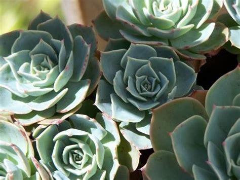 piante grasse per appartamento piante grasse da appartamento piante grasse piante