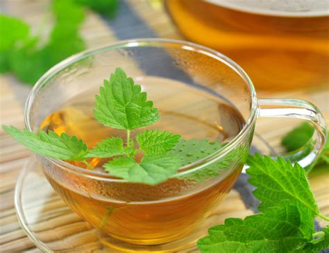 Nettles Liver Detox nettle tea detox your through tonifying its organs