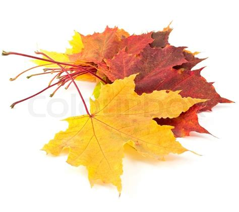 Autumn Leaves On A White Background Stock Photo Colourbox Fall Leaves On White Background
