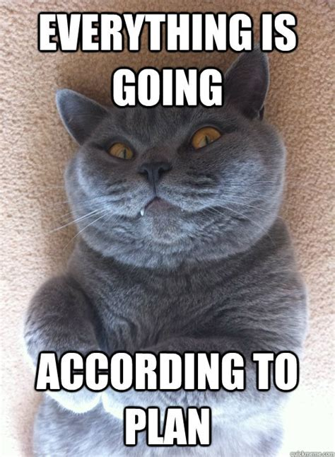 Best Angry Cat Meme - the best damn cat memes on the internet craveonline