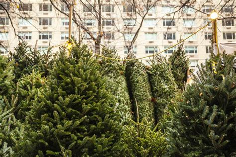 buy a nyc where to buy a real tree in nyc