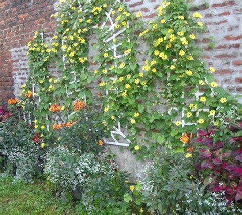 Plante Grimpante Pousse Rapide by Plante Pousse Rapide Terrasse En Bois Avec Plante