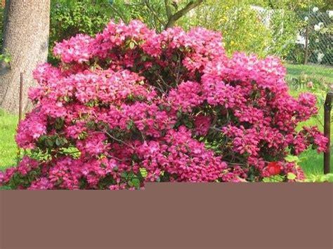 piante da giardino con fiori come coltivare le piante da giardino piante in giardino