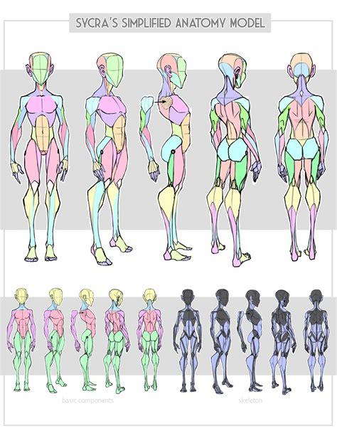 Simplified Anatomy For The Comic Book Artist sycra s simplified anatomy model by sycra on deviantart