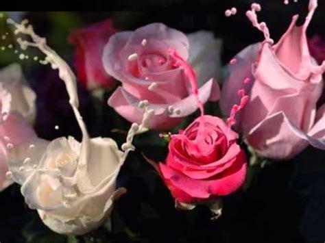 Stelan Next Flower shapplin spente le stelle fijne avond en goede