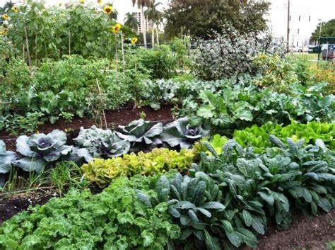 10 Summer Vegetable Gardens For Summer Fresh Salad Top Best Organic Compost For Vegetable Garden