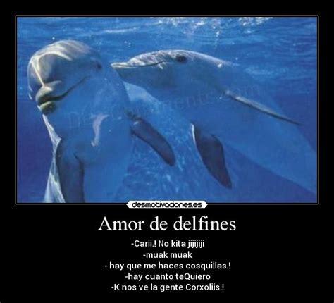 imagenes de amor animadas de delfines amor de delfines desmotivaciones