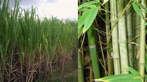 How To Make Paper From Sugarcane Waste - how to make paper from sugarcane waste 28 images how