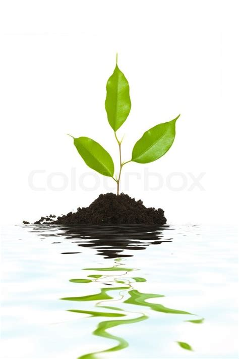 tiny plants an image of a tiny green plant and water stock photo
