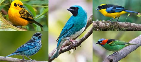 maybe birds can have it all dazzling colors and pretty