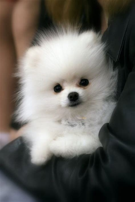 Paw Lotion Anjing puppies i search i