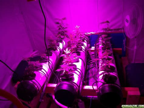 sun grow light reviews kingjohnc s green sun led lights znet4 aeroponic indoor