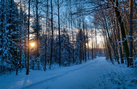 winter hd wallpaper background image  id